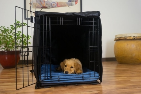 Absorption Sheets on dog crate